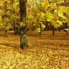 Парк Кадриорг, Таллинн