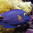 Подводный мир Келли Тарлтона, Окленд
