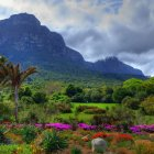 Ботанический сад Кирстенбош, Кейптаун