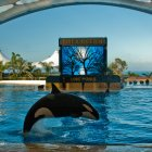 Зоопарк Лоро Парк, Тенерифе