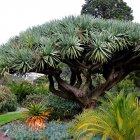 Королевские ботанические сады, Мельбурн