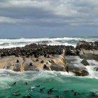 Остров морских котиков, Кейптаун