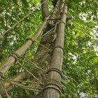 Парк «Приключения в вершинах деревьев», остров Чанг