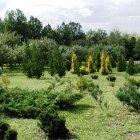 Уфимский ботанический сад