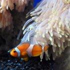 Океанариум «Подводный мир Паттайи»