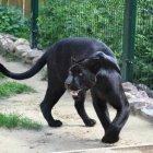Зоопарк «Лимпопо», нижний Новгород