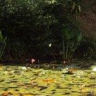 Лагуна в Ботаническом саду Каракаса, Венесуэла