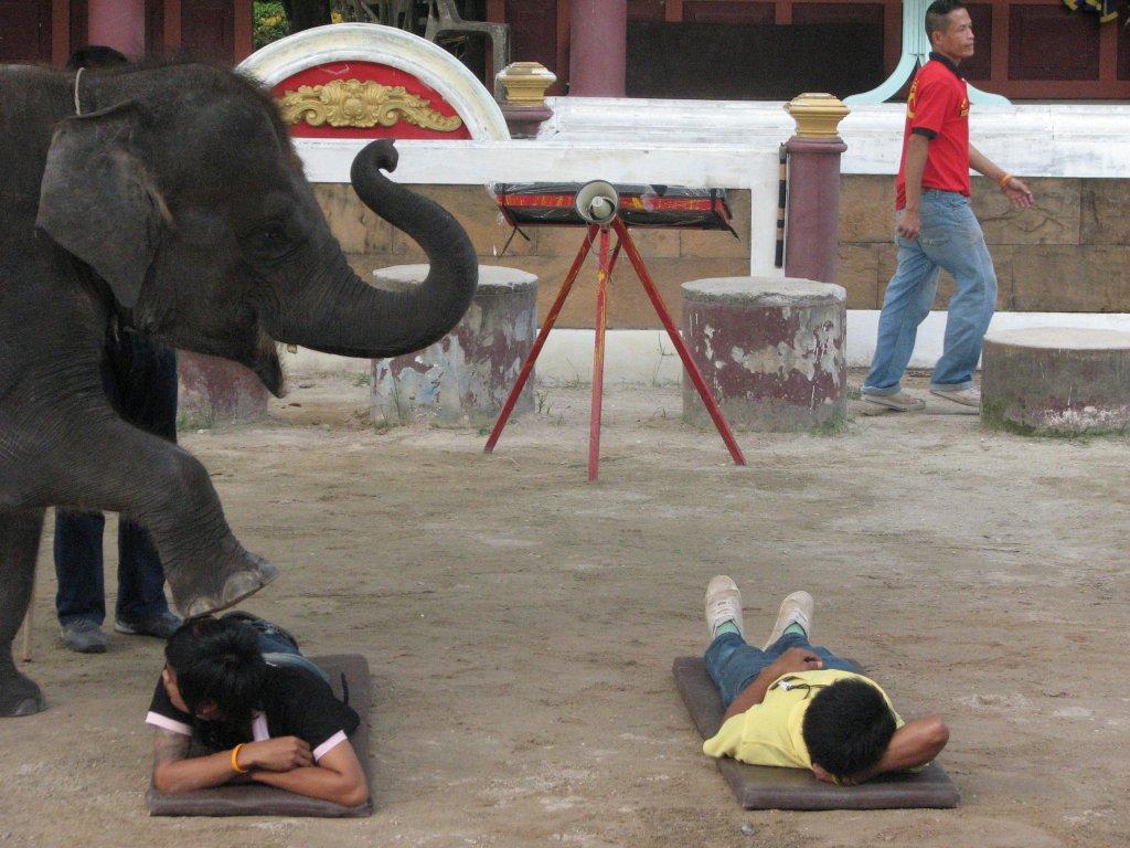 Сделала минет слону 15 фотография