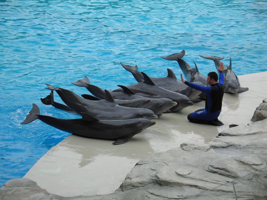 Дельфинарий в риччионе италия