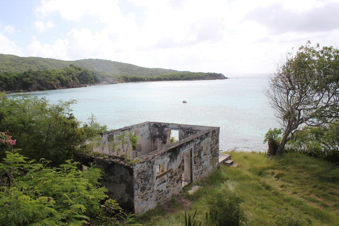 манго остров фото