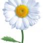 Аватар пользователя AlenkaPisanka